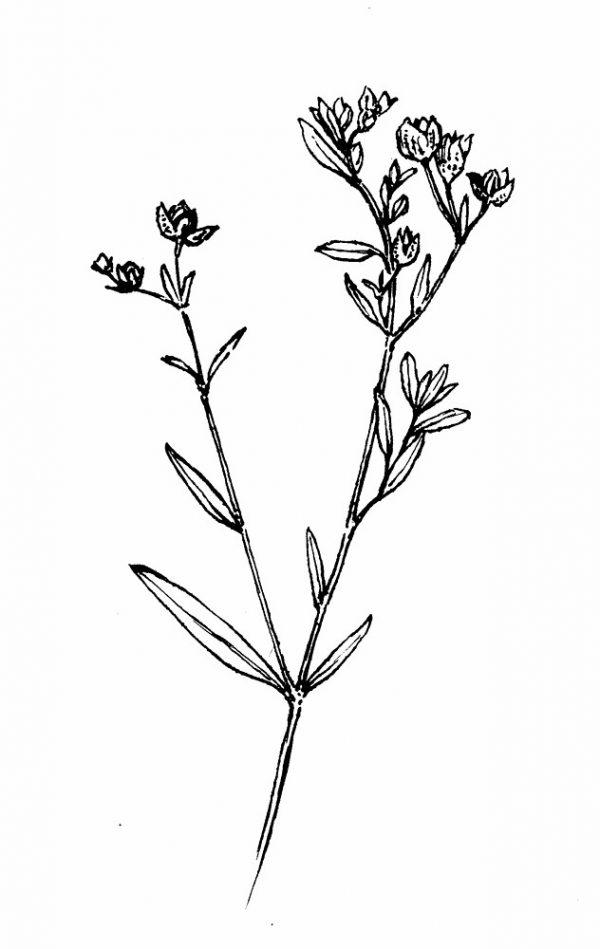 Flower tattoos for girls, lovely designs